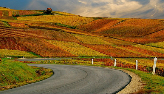 French Vineyard in Autumn. The Good Life France.