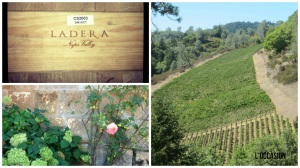 The gorgeous setting at Ladera Vineyards.
