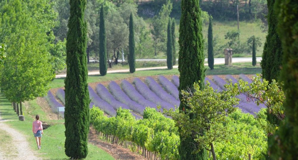 provence-photo-civp-f-millo