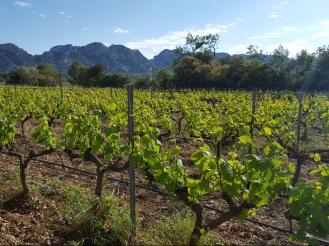 Provence wine, travel, vineyards, organic vines