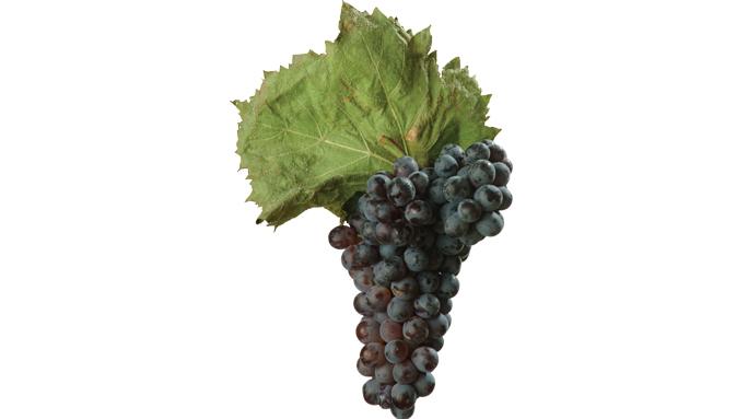 Credit: Wines of Puglia