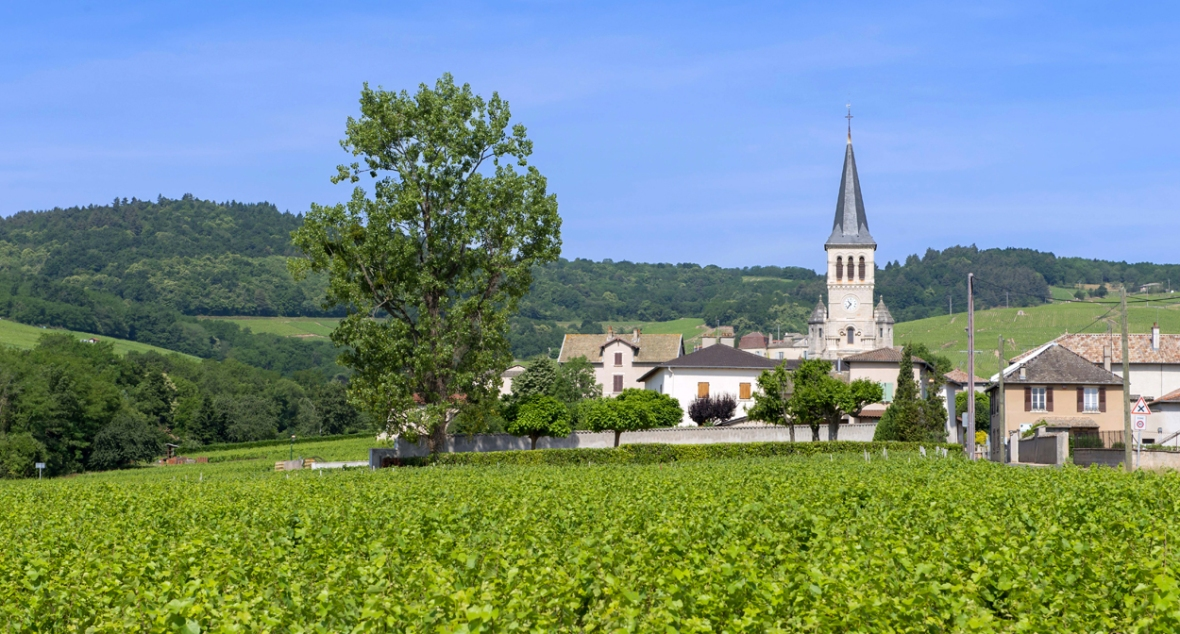 beaujolais-chenas-photo-jb-laissard-inter-beaujolais