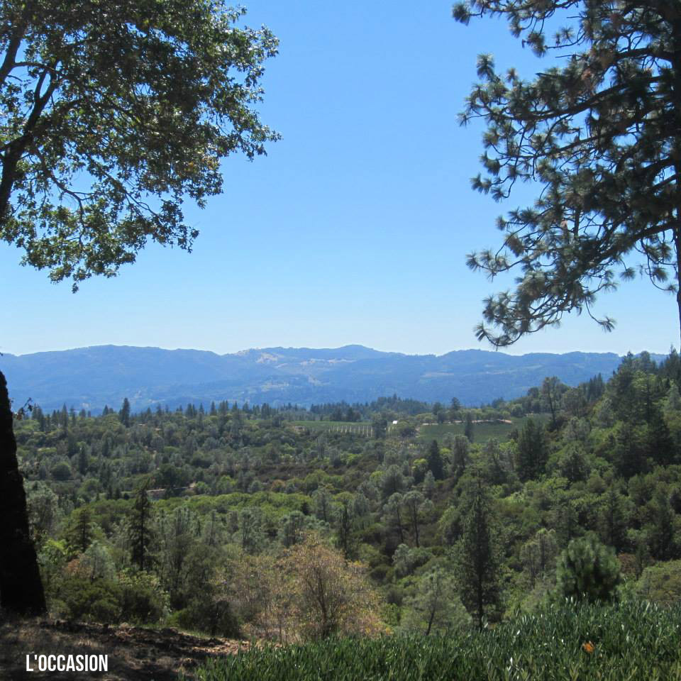 view-from-howell-mountain_hall-winery-ready