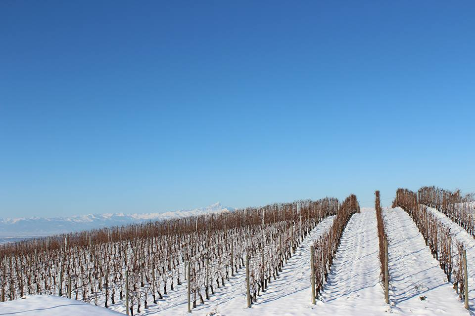 The vineyards of G. D. Varja, Credit: G. D. Varja