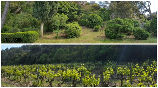 Les Baux de Provence Vineyards