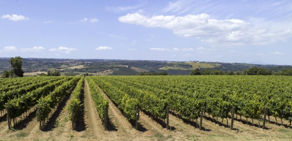 Italian vineyards in Lazio.