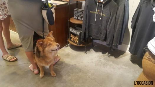 Dog Friendly California Wineries include MUMM Napa