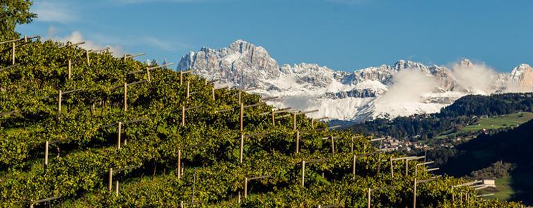 Alpine wines of Italy, Alto Adige