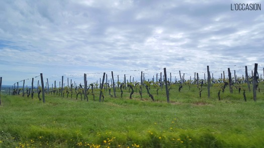 Bergerac Vineyards in Périgord Dordogne France
