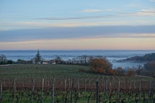 Organic Biodynamic Vegan French Wine