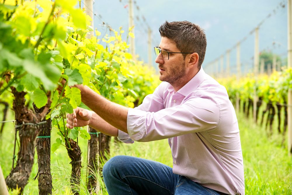 Alpine winemaker Giovanett Italy