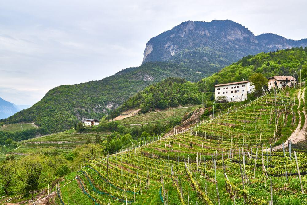 Sloped vineyards, Italy, Alto Adige