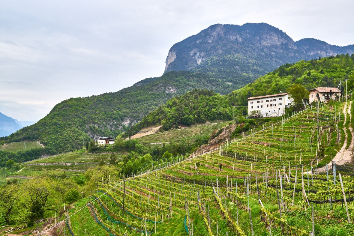 Sloped vineyards, Italy, Alto Adige