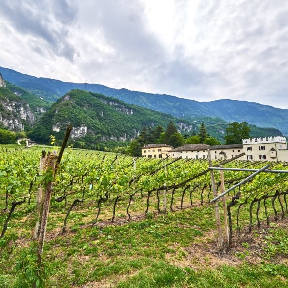 Alpine Wine, Italian Wine, Beautiful Vineyards