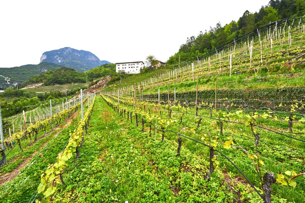 Südtirol, South Tyrol, Alto Adige