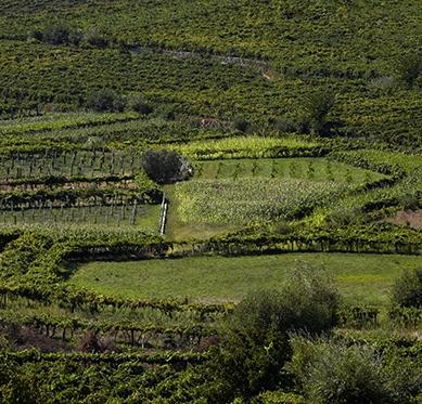 Vinho Verde, Courtesy: Wines of Portugal