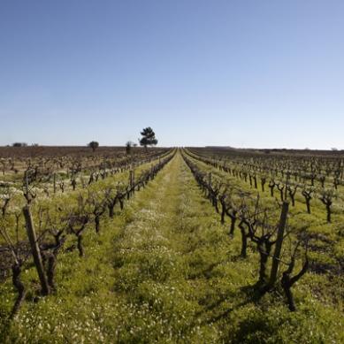 Tejo, Courtesy: Wines of Portugal