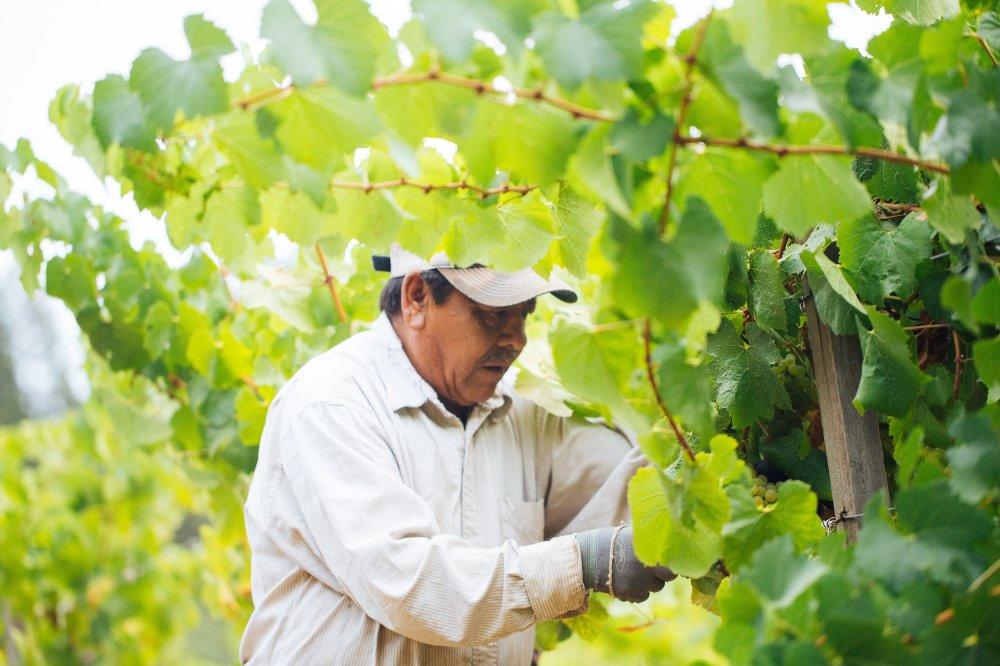 Napa Valley Vineyards, Napa Valley Wine, California Wine