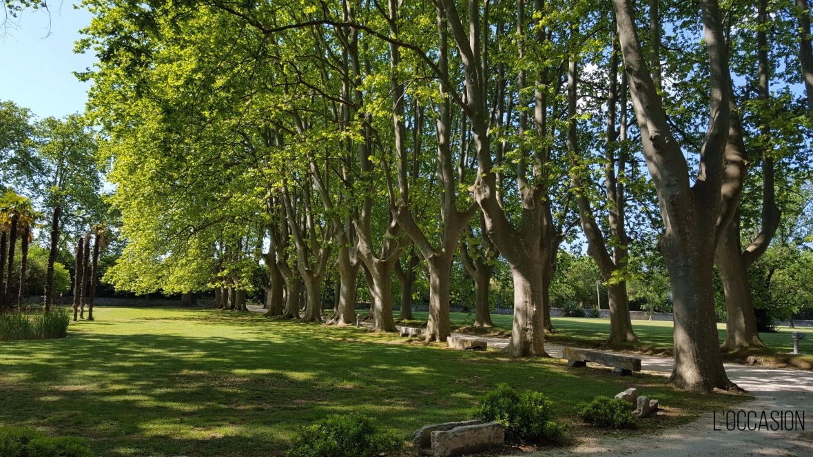 Plane trees, French gardens, nature, summer in Provence