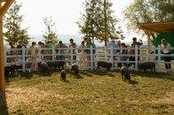 Heirloom pigs. Courtesy: Rural Festival Emilia