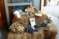 Wine grapes and produce. Courtesy: Rural Festival Emilia