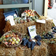 Wine grapes and produce. Courtesy: Rural Festival Emilia