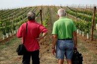 Native and ancient Italian vineyard varietals. Courtesy: Rural Festival Emilia