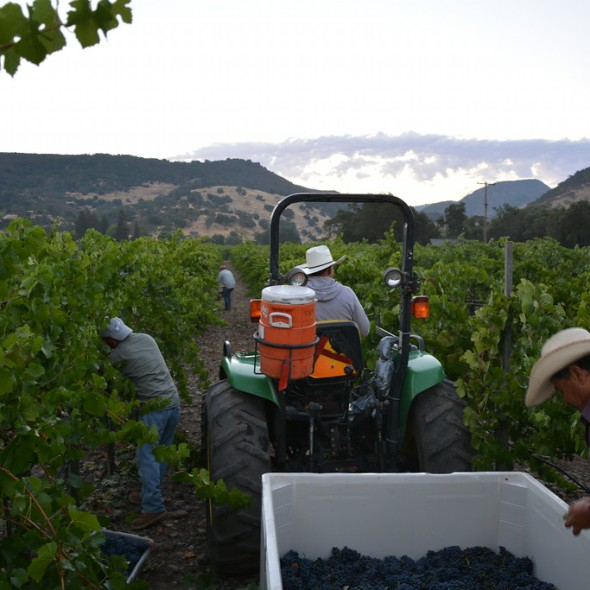 California Wine Month, Napa Valley Vintners