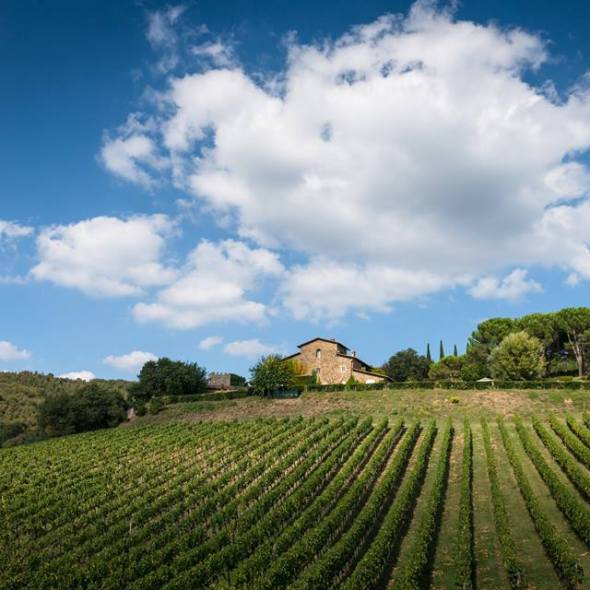 Italian vineyards, Wine tasting in Tuscany
