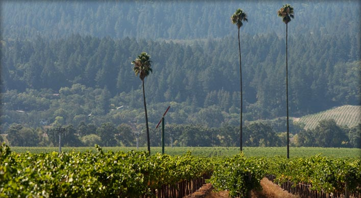 #NapaStrong, Napa Wine, Napa Vineyards, Merlot,