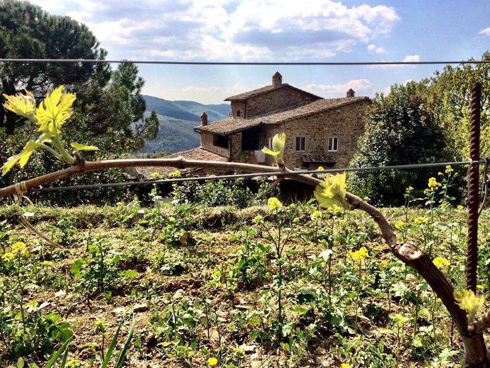 Italian vineyards, Villa in Tuscany, Beautiful view