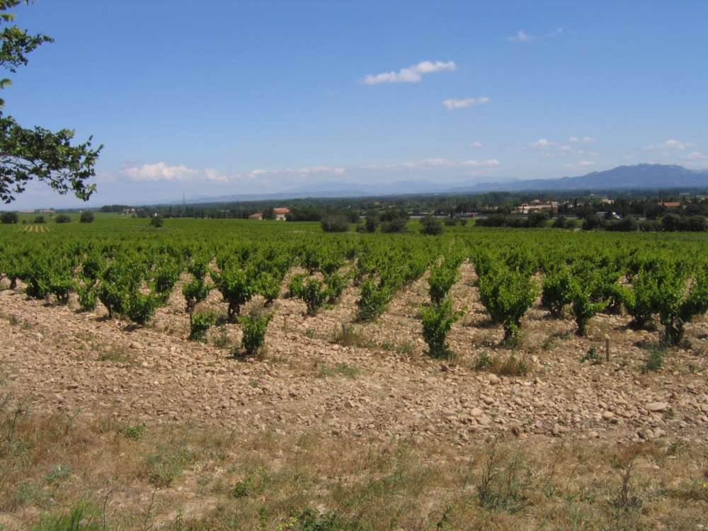 Rhone Vineyard, Rhone Valley, Rhone wine, French wine