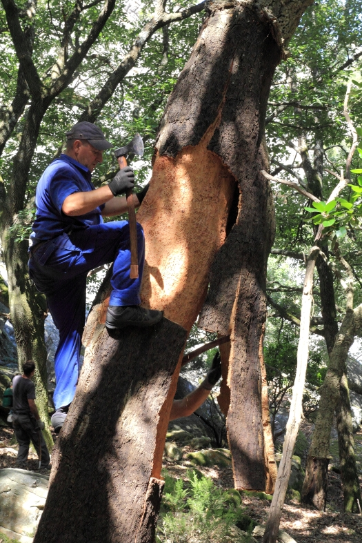trees, endangered species, Rainforest Alliance, WWF