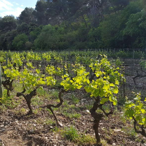 wines from Provence, wine country, French wine