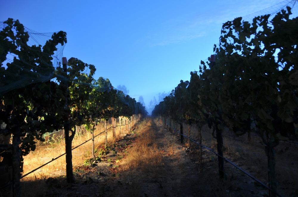 Petaluma Gap, Forbes Wine Writer, California Wine, Sonoma Wine