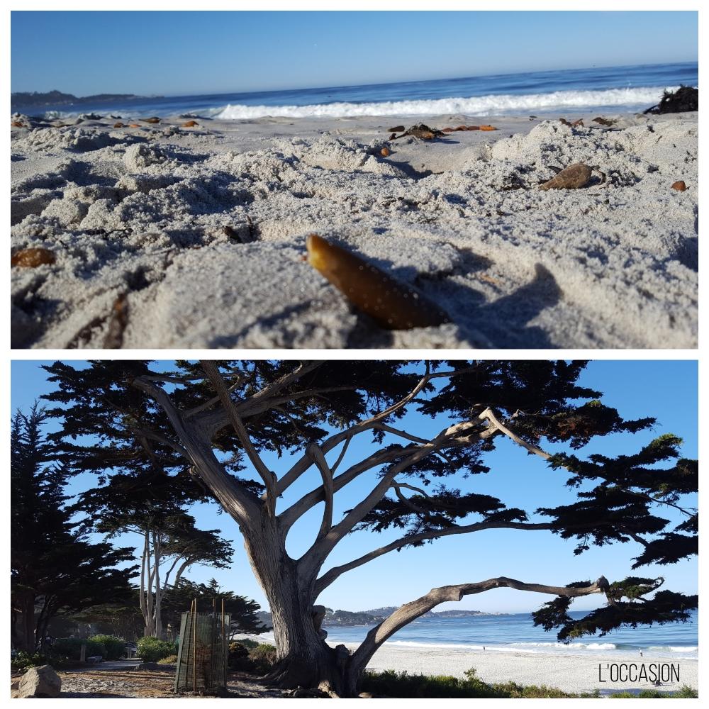 beach, seaside, Pacific Ocean, trees