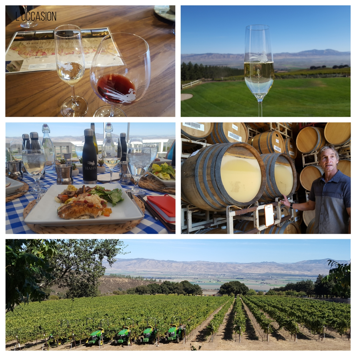chardonnay, pinot noir, beautiful vineyards, salinas valley