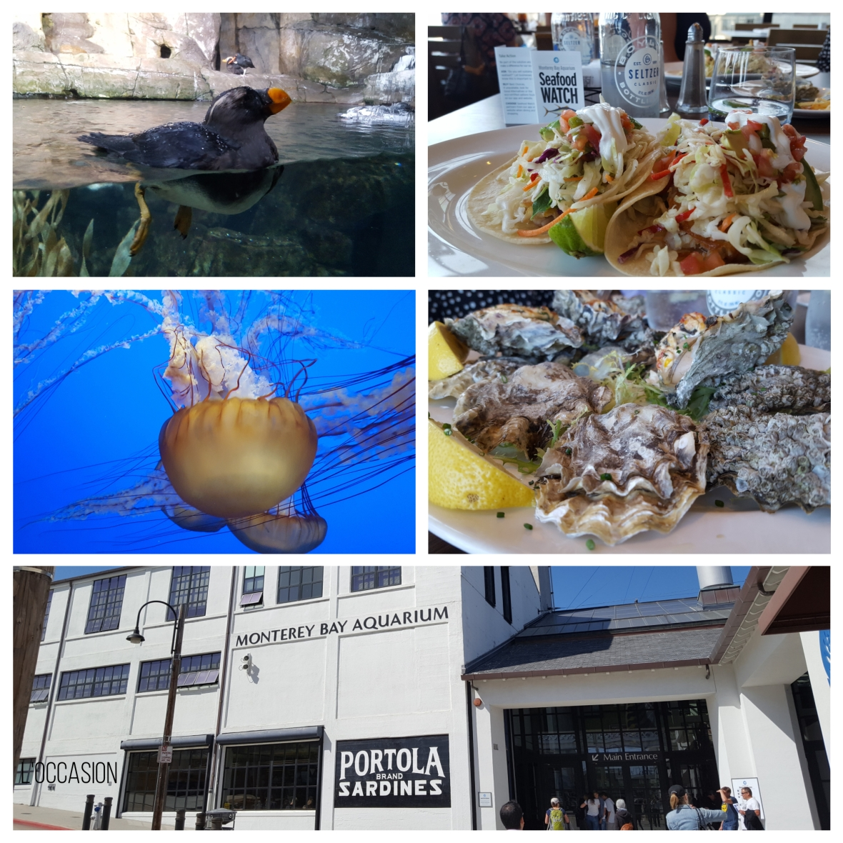 sea life, seafood, sustainable sea food, sea food watch