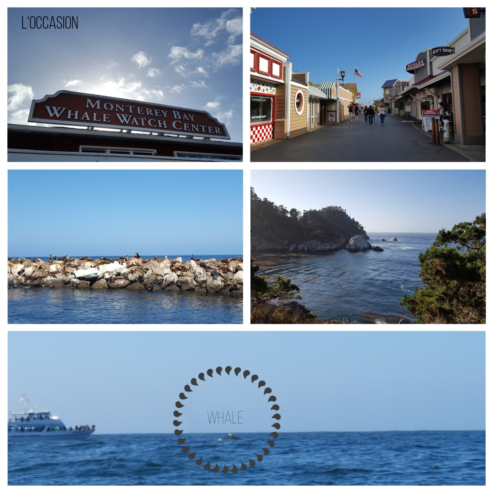 California, big sur, wine country, a day in Monterey