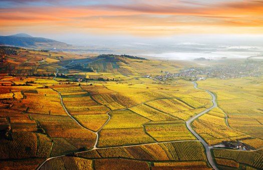 French wine, wine travel, Riesling, white wine, Grand Cru