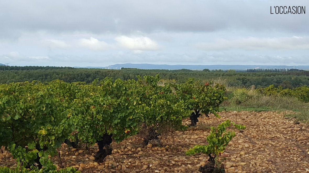 Lirac Vineyard