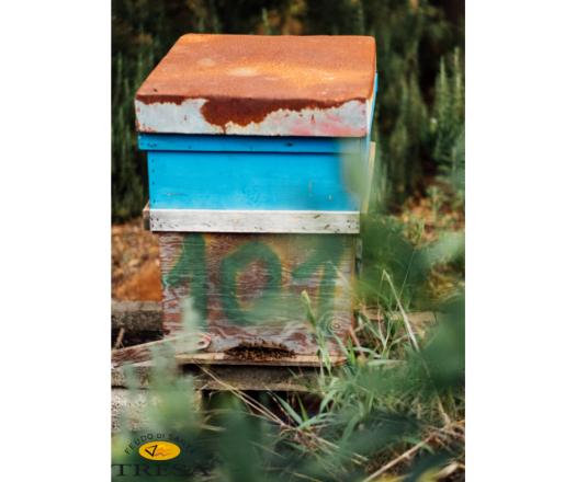 FST beehive