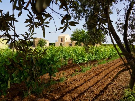 FST vineyards