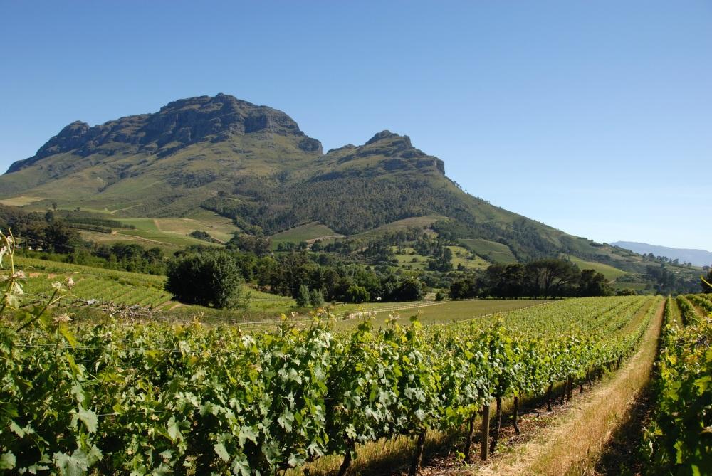 vineyard view, wine vacation, wine tasting
