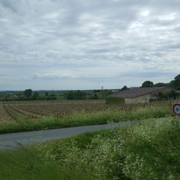 Southwest France vineyards, historic vineyards, indigenous French grapes, Godforsaken Grapes