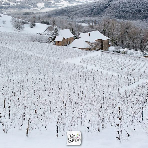 French wine, mountain wine, Alpine Wine